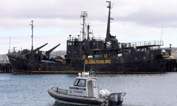 A Fisheries and Oceans patrol boat passes by the MV Farley Mowat in Sydney, N.S., in 2008. A B.C. MP is pressing Ottawa to do more to deal with the hundreds of abandoned vessels that blight Canada's coasts and harbours. (The Canadian Press/Mike Dembeck)