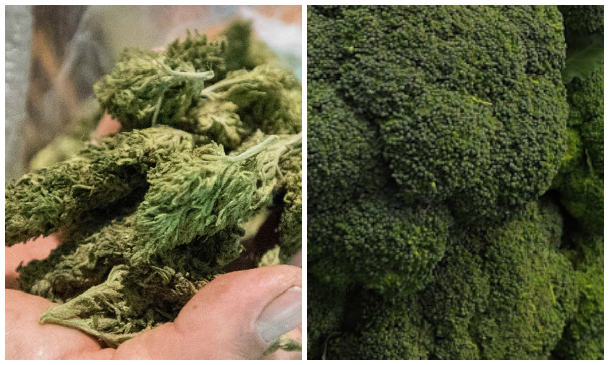 Marijuana (L) and broccoli (R) (Denis Doyle/Getty Images and OSH EDELSON/AFP/Getty Images)