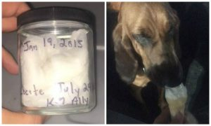 Dog Finds Missing Florida Woman Using Scent She Bottled in 2015