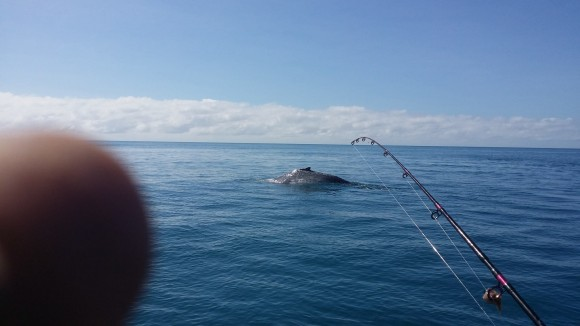 Humpback whales seen from the A-one Fishing Charters boat on Aug. 4, the day before it collided with a whale. (A-one Fishing Charters/Facebook)