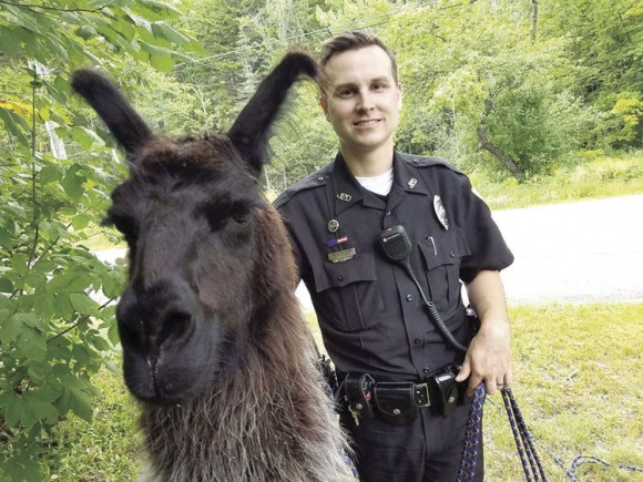 Jackson Patrol Officer Ryan McDonald with Noir the llama on Aug. 14, 2017. (Jackson Police Department)