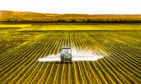 Weeding Out Vaccine Toxins: MMR, Glyphosate, and the Health of a Generation