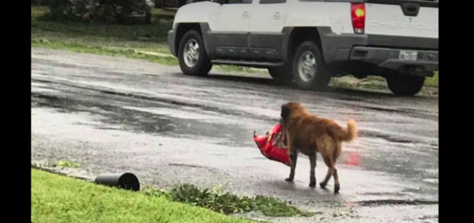 A dog named Otis walking down a street in Sinton, Texas, with a bag of dog food in his mouth. (Screenshot via Facebook/Tiele Dockens)