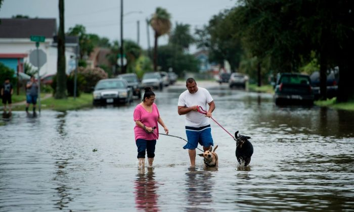 People walk dogs through flooded streets as the effects of Hurricane Harvey are seen August 27, 2017 in Galveston, Texas. Hurricane Harvey left a trail of devastation Saturday after the most powerful storm to hit the US mainland in over a decade slammed into Texas, destroying homes, severing power supplies and forcing tens of thousands of residents to flee. (BRENDAN SMIALOWSKI/AFP/Getty Images)
