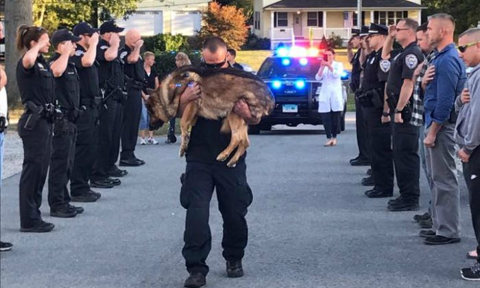 Officer Michael D'Aresta carries his K-9 partner to the veterinarian to be euthanized on September 1,  2017, in Middletown,  Conn. (Middletown Police Department)