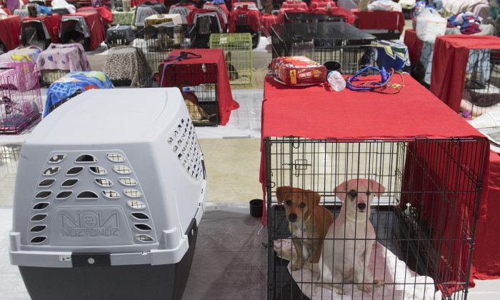 51 Pets Rescued in Florida in 48 Hours as Irma Makes Landfall