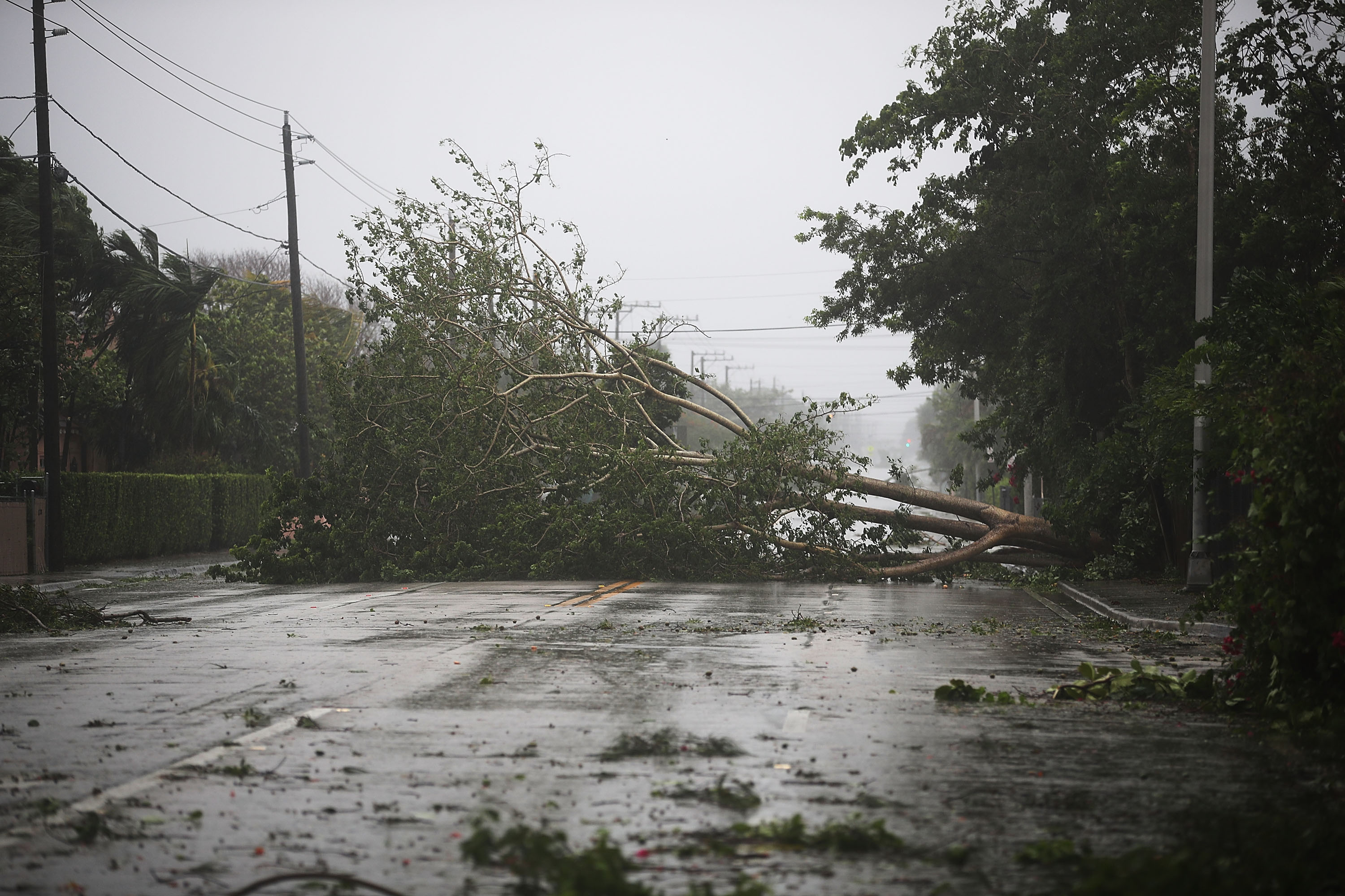 MIAMI, FL - SEPTEMBER 10: Trees and branches are seen after being knocked down by the high winds as hurricane Irma arrives on September 10, 2017 in Miami, Florida. Hurricane Irma made landfall in the Florida Keys as a Category 4 storm on Sunday, lashing the state with 130 mph winds. (Photo by Joe Raedle/Getty Images)