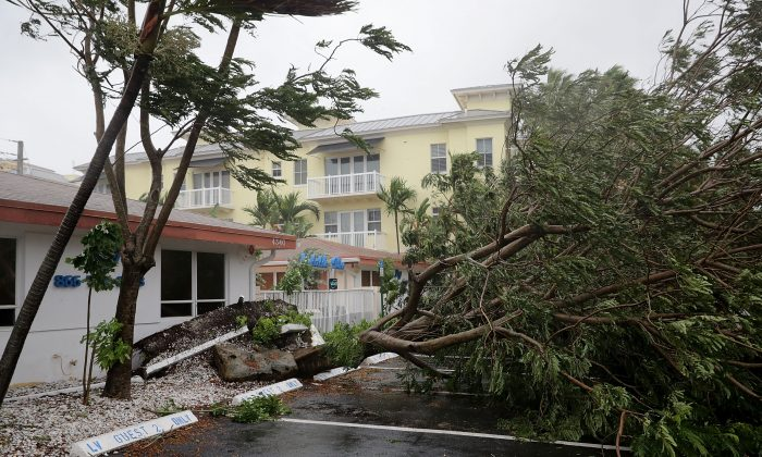 A tree is felled by winds produced by Hurricane Irma September 10, 2017 in Fort Lauderdale, Florida.  (Chip Somodevilla/Getty Images)