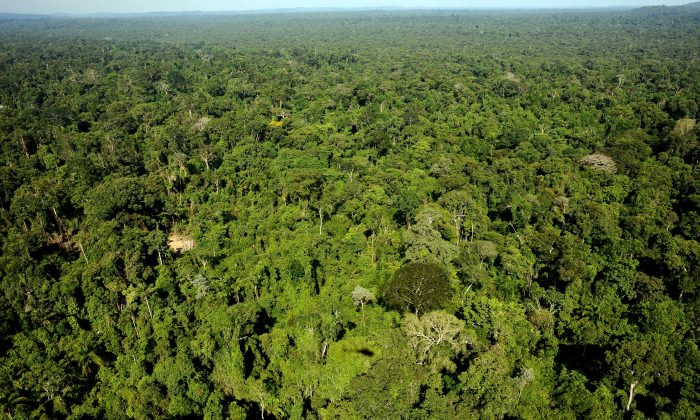 Aerial view of the Amazonic forest reserve of Trairao, western Para state, northern Brazil on December 4, 2011. Brazilian authorities were conducting an operation to fight the illegal extraction of wood in the national forest reserves of Trairao and Riosinho do Afrisio. (Lunae Parracho/AFP/Getty Images)