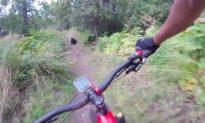 Quick-Thinking Mountain Biker Narrowly Avoids Black Bear