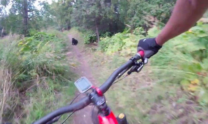 A mountain biker in Anchorage, Alaska, encounters a black bear on his trail, Sept. 12, 2017 in Kincaid Park. (Reddit/pfffhuckit via Storyful)