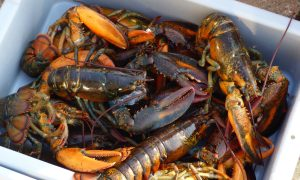 RCMP Makes More Arrests Made in Dispute Over Indigenous Lobster Fishing in Nova Scotia