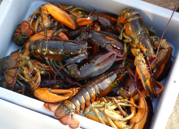 Nova Scotia is famous for its lobsters. (Manos Angelakis)