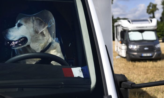 A dog is pictured inside a motorhome parked in a field in Malestroit, western France, on September 2, 2017.  (FRED TANNEAU/AFP/Getty Images)