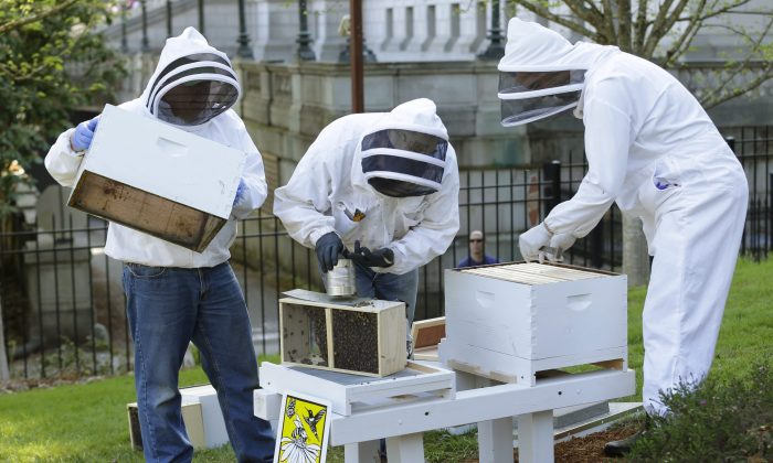 Beekeepers with the Olympia Beekeepers Association install hives on the lawn of the Governor's mansion in Olympia, Washington, on April 20, 2016, to raise awareness about the decline in bee populations. A group of scientists met with MPs in Ottawa this week to make the case for an immediate ban on neonicotinoid pesticides. (AP Photo/Ted S. Warren)