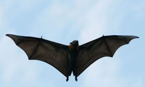 Mother Forced to Leave Home After 5,000 Bats Drop Dead in Her Yard