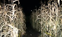 3-Year-Old Boy Left Behind at Corn Maze, Family Only Realized Next Day