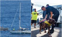 2 Americans And Their Dogs Rescued After Being Lost 5 Months in Pacific Ocean