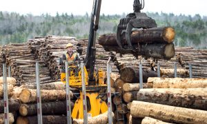 Lighthizer Opposes WTO Ruling Against US in Canadian Lumber Dispute
