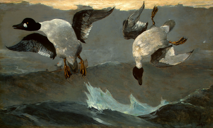 Waterfowl – not turkey – would have been the main course. (Winslow Homer, 'Right and Left' (1909), National Gallery of Art)
