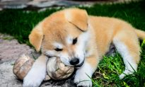 US Food and Drug Administration Warns Dog Owners About Dangers of Bone Treats