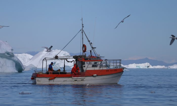 A fishing boat navigates past icebergs on July 20, 2013 in Ilulissat, Greenland. (Joe Raedle/Getty Images)