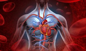 Getting to the Heart of the Matter: A Look at Mercury and Cardiovascular Disease