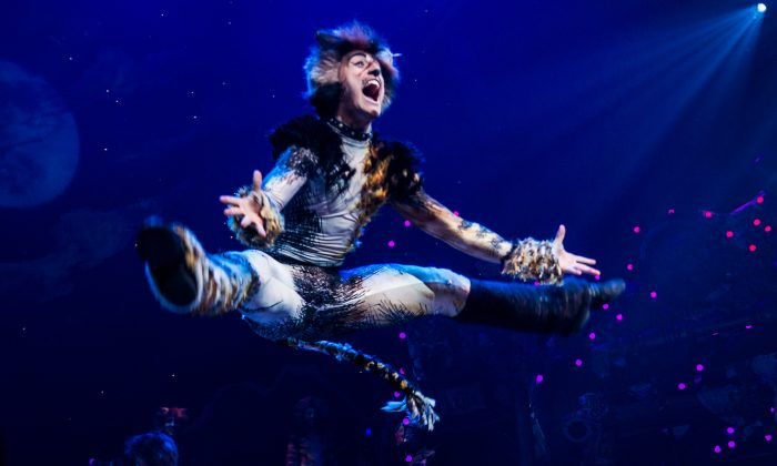 """A service dog ran amok at a performance of the first-ever Broadway revival of Andrew Lloyd Webber's """"Cats"""" musical. (Photo by Noam Galai/Getty Images for CATS)"""