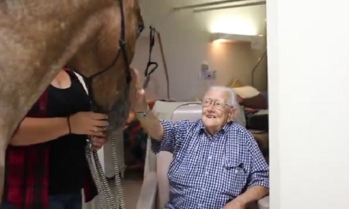 A 17-year-old horse named Bushman visiting the residents of a retirement home in Sydney has gone viral. (Christadelphian Aged Care/screenshot via YouTube)