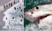 Australian Beach Rips: Much More Deadly Than Man-Eating Sharks