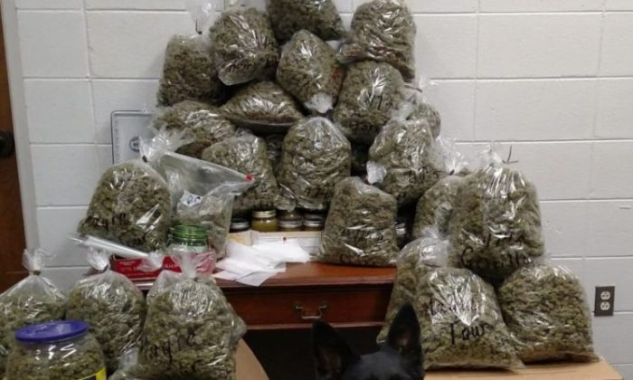 Sixty pounds of marijuana and cans of concentrated THC seized from an elderly couple in Nebraska. (York County Sheriff's Department)