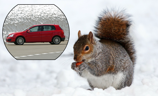 A UK man's car troubles turned out to have been caused by hundreds of acorns stashed in his gearbox––possibly by a squirrel. (Stock photos via CC0)
