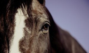Horses Rescued from Stables as Fire Destroys Hundreds of Cars