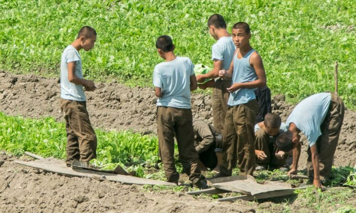North Korean soldiers work in a field on Aug. 24, 2015, North Korea.  (Xiaolu Chu/Getty Images)