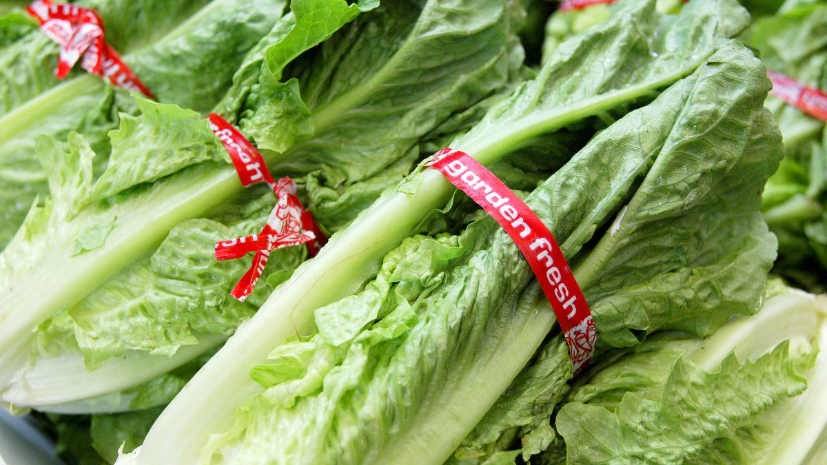 Romaine lettuce has been identified as the source of e. coli bacteria which has killed two people in the past three weeks. (Justin Sullivan/Getty Images)