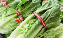 CDC Confirms Source of Multi-State E. Coli Outbreak in Romaine Lettuce