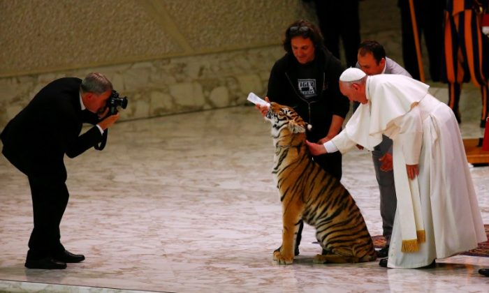 Pope Francis caresses a tiger during a Jubilee audience for the circus performers and street artists in Paul VI Hall at the Vatican on June 16, 2016. (REUTERS/Tony Gentile)