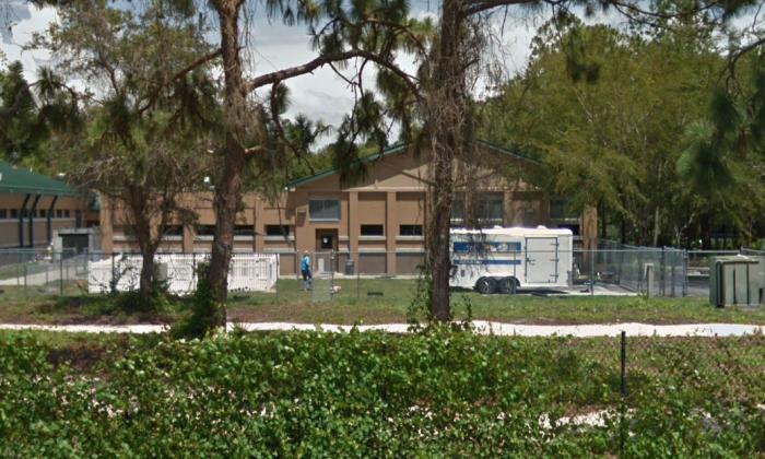 Pinellas County Animal Services. (Screenshot Via Google Maps)