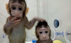 China Makes Frightening Advances in Cloning