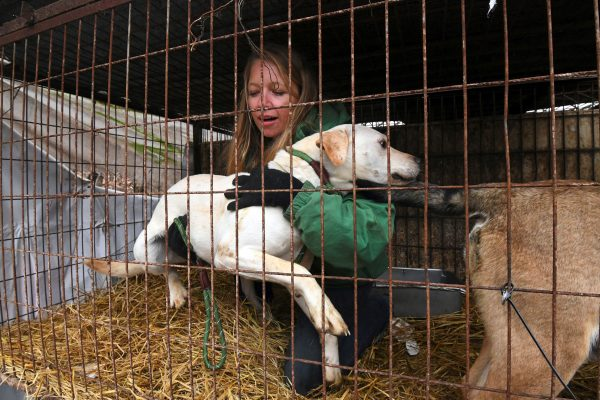 In this picture taken on November 28, 2017, Lola Webber of the Humane Society International (HSI) interacts with a dog in a cage at a dog farm during a rescue event, involving the closure of the farm organised by the HSI in Namyangju on the outskirts of Seoul.<br /> The tradition of consuming dog meat has declined as the nation increasingly embraces the idea of dogs as pets instead of livestock, with eating them now something of a taboo among young South Koreans. / AFP PHOTO / JUNG Yeon-Je / TO GO WITH SKorea-agriculture-food-dog, FEATURE by Jung Ha-Won (Photo credit should read JUNG YEON-JE/AFP/Getty Images)
