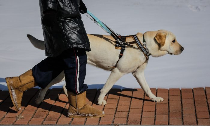 A seeing eye dog and its owner (not directly related to the story). (Wang He/Getty Images)