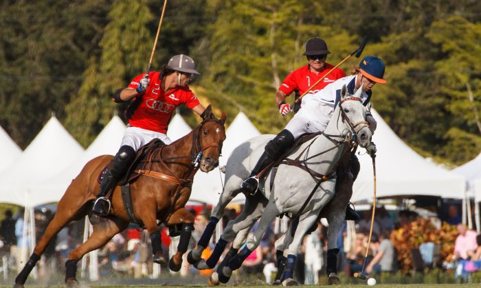 """The """"sport of kings"""" draws fans from January through April at Wellington's International Polo Club.  (Courtesy of Discover the Palm Beaches)"""