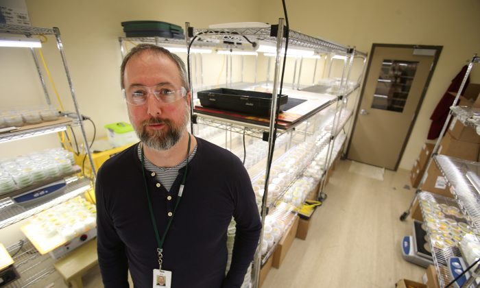Jed Christianson, a canola plant pathologist working to develop clubroot-resistant canola, at Monsanto Canada's plant breeding centre in Winnipeg on Feb. 12, 2018. (Reuters/Shannon VanRaes)
