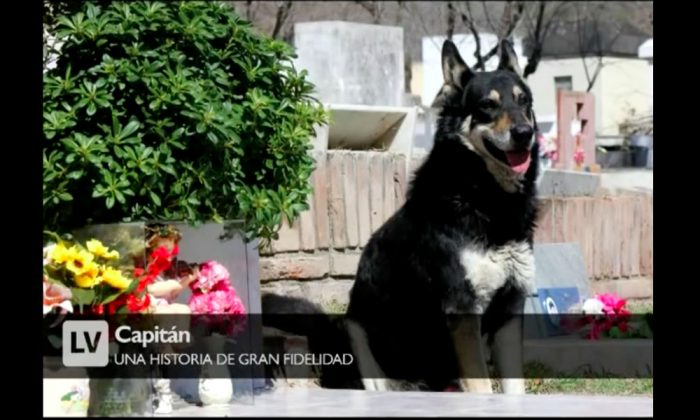The German shepherd mix named Capitán that stayed at his owners grave for 11 years before passing away on Feb. 19, 2018. (Screenshot via  Lavoz comar/Youtube)