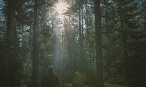 How Nature Heals