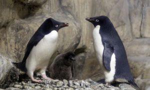 Scientist Discover Mega-Colony of 1.5 Million Penguins Hidden in Antarctica