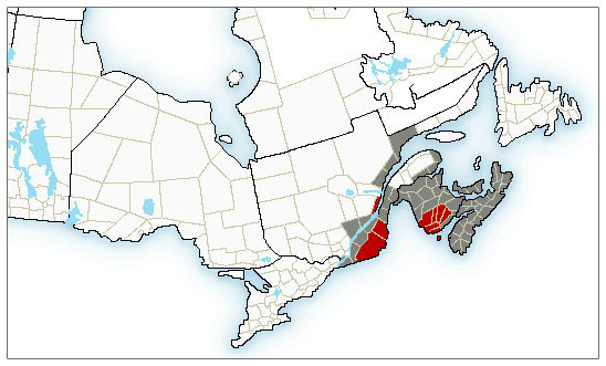 Widespread special weather statements and weather alerts are in place for the Maritimes. (Environment Canada)