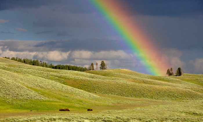 The rainbow represents balance, potential, and the promise of renewal when fresh sunshine appears.(Todd Cravens/Unsplash)