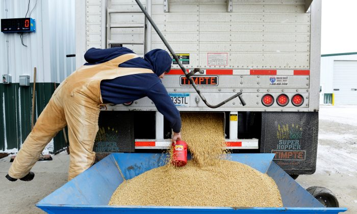 A worker takes a sample from an incoming truckload of soybeans at Peterson Farms Seed facility in Fargo, North Dakota, U.S., Dec. 6, 2017. China's latest list of tariffs on American goods includes soybeans and other key agricultural commodities produced in states from Iowa to Texas that voted for U.S. President Donald Trump in the 2016 presidential election. (Dan Koeck/File Photo/Reuters)