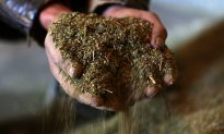 US Seizes Over 100 Homes in Crackdown on Marijuana Operation, Tied to China-Based Gangs